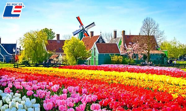 Thời điểm, quy trình xin visa du học Hà Lan